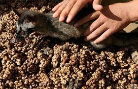 Купить кофе в зернах в интернет-магазине